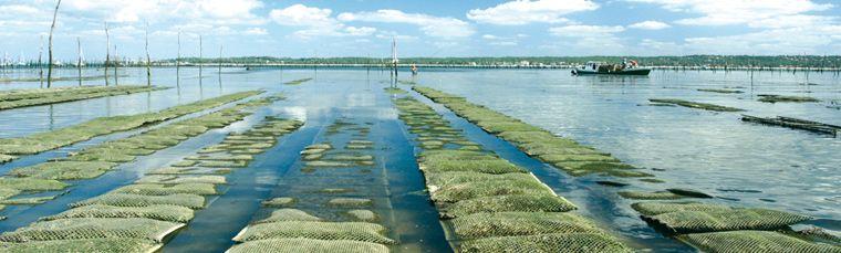 Le bassin d 39 arcachon le lieu r v pour un s jour en famille for Piscine arcachon horaires
