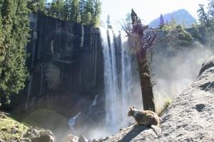 Yosemite The Mist Trail Vernal Fall